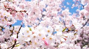 april picture
